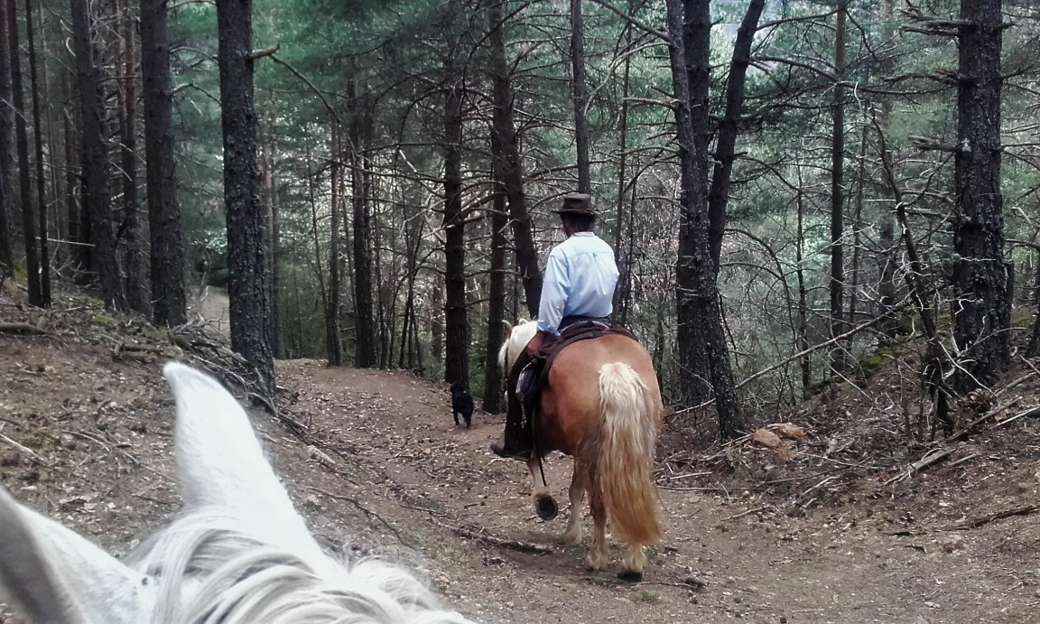 pels boscos del Cadí