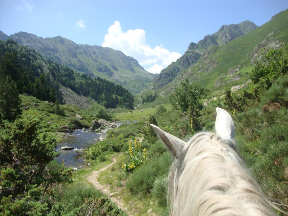Cavalls Baridà