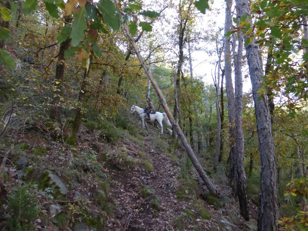 Camí al bosc