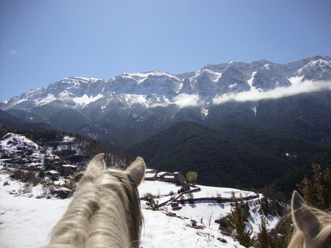 Cavallsbaridà