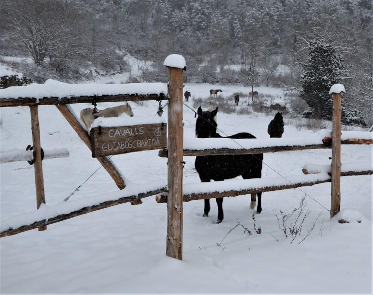 Ranxo de Cavalls Guiabosc Baridà
