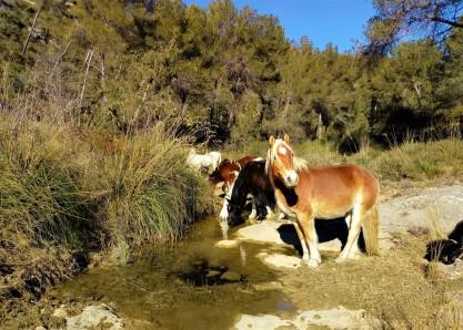 Cavalls Guiabosc Baridà Garraf