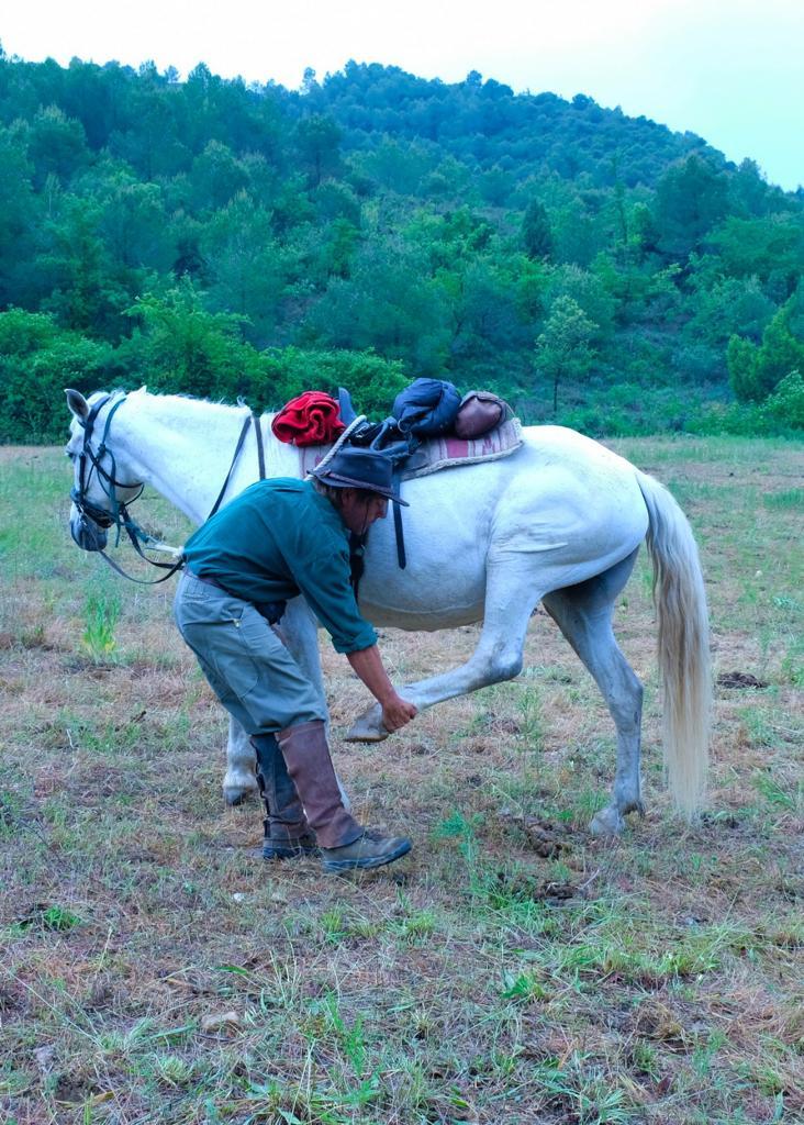 Estiraments per cavalls